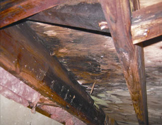 mold and rot in a Middletown crawl space