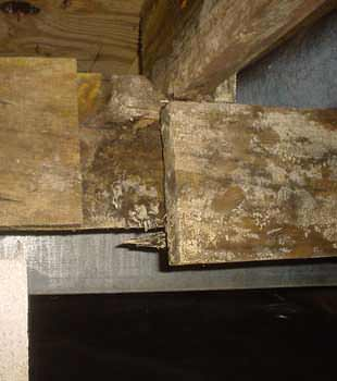 Extensive basement rot found in
