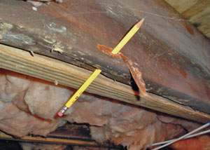 Destroyed crawl space structural wood in Pearl River