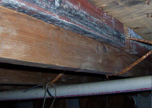 Rotting, decaying wood from mold damage in Hyde Park
